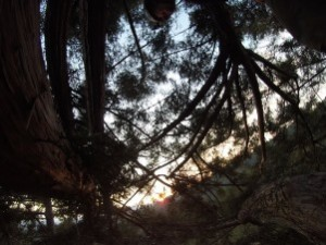 Sunset from the Canopy