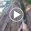 Video of Garth's Giant Redwood Climb