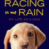 Storytelling's Power in The Art of Racing in the Rain